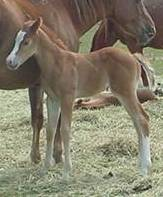 dn126filly.jpg