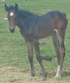 dn22filly.jpg